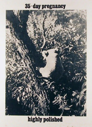 Les Levine, 35-day Pregnancy, Photo-etching, Signed And Numbered In Pencil