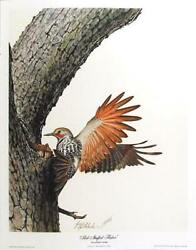Guy Coheleach, Red Shafted Flicker, Lithograph