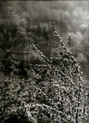 Josef Sudek, View Of Spring From Our Street, Photograph
