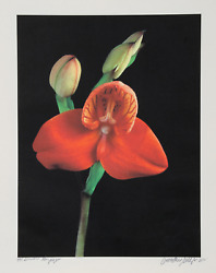 Jonathan Singer Red Orchid - Botanica Magnifica Digital Photograph On Japon Pa