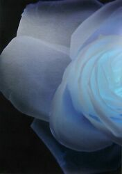 Paul Solberg Lalique From The Bloom Portfolio Digital Pigment Print With Flock