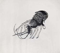 Leonard Baskin, French Prawn, Woodcut Print On Rice Paper, Signed And Numbered I