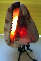 Antique Victorian Italian Hand Carved Cameo Helmet Shell Lamp
