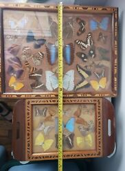 Vintage Butterfly Specimen Displays Tray And Wall Art