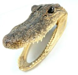 Small Baby Alligator Head Taxidermy Mouth Letter Holder 6quot; Long