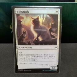 Mtg Japanese Lucky Stray Cat Foil List No.mm1820