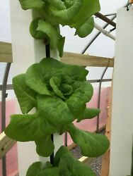 Vertical Hydroponic Growing System Indoor