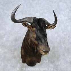 14587 P | African Blue Wildebeest Taxidermy Shoulder Mount For Sale