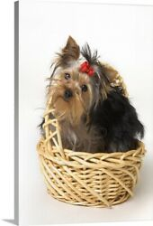 Solid-Faced Canvas Print Wall Art entitled Yorkshire Terrier Puppy