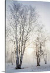 Birch Trees In The Fog In Winter Canvas Wall Art Print Tree Home Decor