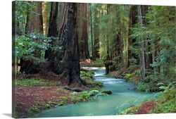Redwood Forest Ii Canvas Wall Art Print, Tree Home Decor