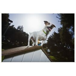 Poster Print Wall Art entitled Jack Russell Terrier on top of doghouse