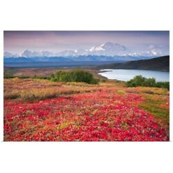 Early Morning View Of Mt. Mckinley And Poster Art Print, Alaska Home Decor