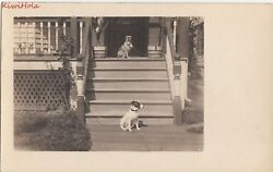 RPPC Postcard Dogs Tied to Porch Jack Russell + Terrier Mix