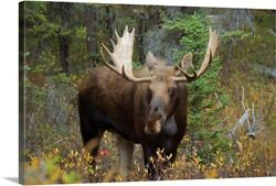 Moose In The Forest Alberta Canada Canvas Wall Art Print Wildlife Home Decor