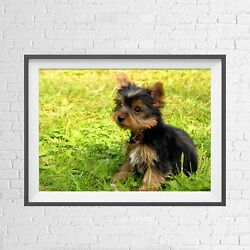YORKSHIRE TERRIER PUPPY DOG CUTE CUDDLY POSTER PICTURE PRINT Sizes A5 to A0 *NEW