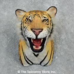 18301 E   Reproduction Bengal Tiger Shoulder Taxidermy Mount