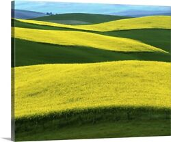 Idaho Moscow Canola Fields In Bloom Canvas Wall Art Print Countryside Home