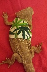Lil#x27; Bestie Bearded Dragon reptile Harness and Leash POT MARIJUANA WEED