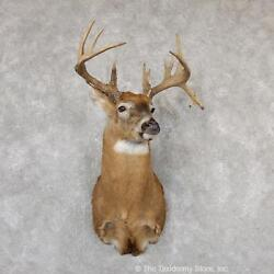 19299 P+ | Whitetail Deer Taxidermy Shoulder Mount For Sale