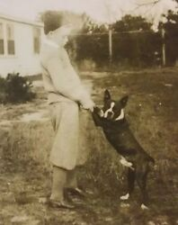 Vintage Old 1920's Photo of a Cute BOSTON TERRIER DOG Standing & Little Boy