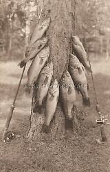 Antique Reprinted 8x10 Photograph 8 Large Bass Rods Fishing Reels