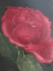 G H Rothe Mezzotint Signed Artist Proof 14/15 Spanish Rose Red Floral German