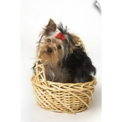 Wall Decal entitled Yorkshire Terrier Puppy