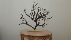 Naturally Dried Branch, Cedrus, Cedar, Natural Wood, Coral Style 02