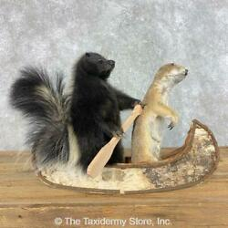 21491 E   Canoeing Pals Prairie Dog And Skunk Novelty Taxidermy Mount For Sal