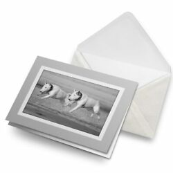 Greetings Card Grey BW English Bull Terrier Dogs #39060