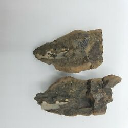 Crab Claw Fossil New Jersey Cretaceous Lobster Decapod Hoploparia Nj Geology