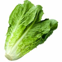 1200+ Romaine Lettuce Seeds   Non-gmo Vegetable Garden Seeds From Usa Ships Free