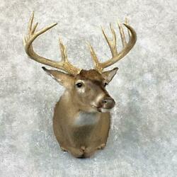 23812 P | Whitetail Deer Taxidermy Shoulder Mount For Sale