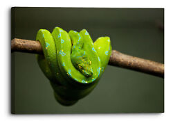 Animal Python Snake Reptile Green Canvas Wall Art Picture Home Decoration
