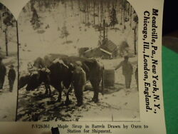 Stereoview Card Oxen Pulling Barrels Of Maple Syrup To Station Reprint 1978