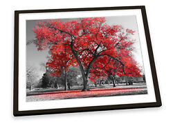 Large Tree Leaves Nature Red Framed Art Print Picture Poster Artwork