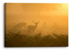 Deer Standing In The Morning Forest Orange Fog Canvas Wall Art Picture Deco...