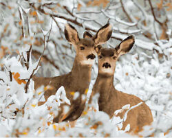 Artistand039s Loft Paint By Number Kit Deer In Snow Winter Forest Scenic Wildlife Doe