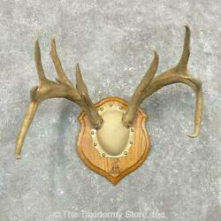 24552 P | Whitetail Deer Antler Plaque Taxidermy Mount For Sale