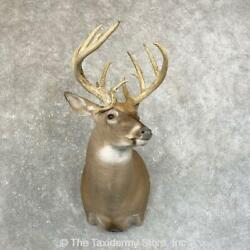 24597 P | Whitetail Deer Taxidermy Shoulder Mount For Sale