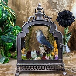 Z2l Taxidermy Oddities Curiosities Lovebird Antique Style Display Collectible