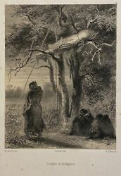 Karl Bodmer / Two Original Lithographs Of Native Americans Tombeaux Des 1st 1850