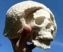 Huge Real White Coral Skull Carving 5 Inches Tall. 2.95 Kilo. From Coral Farm.
