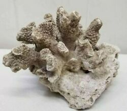 Beautiful Large Natural Sea Coral Reef Beach Decor - Amazing Detail