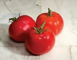 Tomato Charger  1,000 Seeds