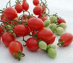 Tomato Pink Champagne  1,000 Seeds