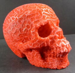 Huge White Coral Dyed Red Skull Carving 3.9 Inches Tall From Coral Farm 890 Gms.