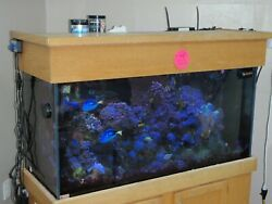 Aquarium 90 Gal Complete With Fish And Coral Lights Stand Sump Pumps Chiller