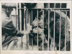 1936 Photo Baby Bear Cub Fed Condensed Milk While Mother Mary Inspects
